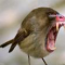 Калиброванный пруток в качестве линейных направляющих - последнее сообщение от Bird